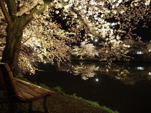 春が来た!転居の春ぅぅっ**